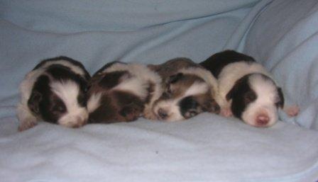 2-12 cuccioli 2