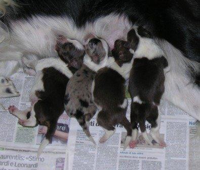 bb 20-11 cuccioli 2