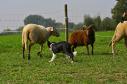 rose-pecore-cucciola3