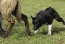 seth-pecore