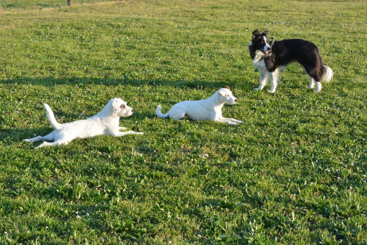 pensione per cani modena
