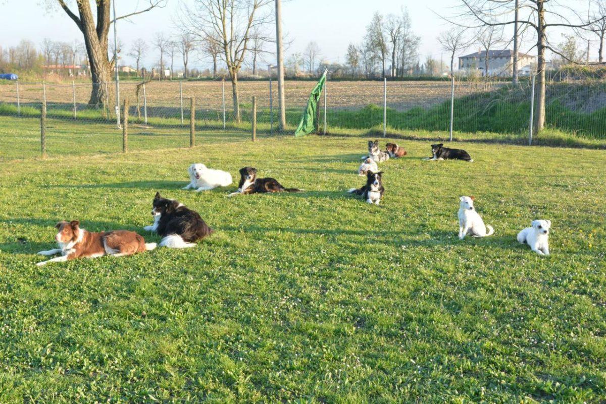 pensione per cani Mondena
