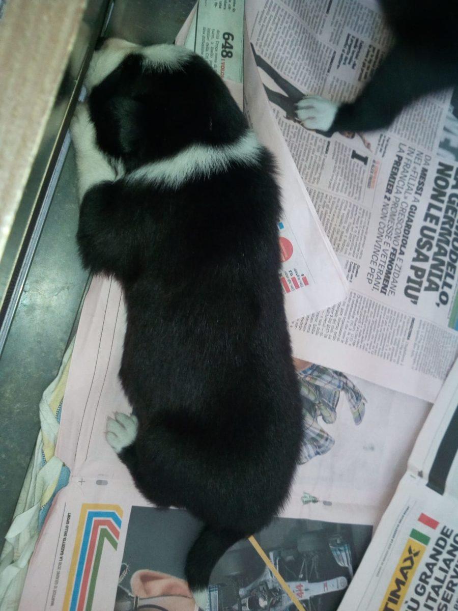 a litter puppies 2