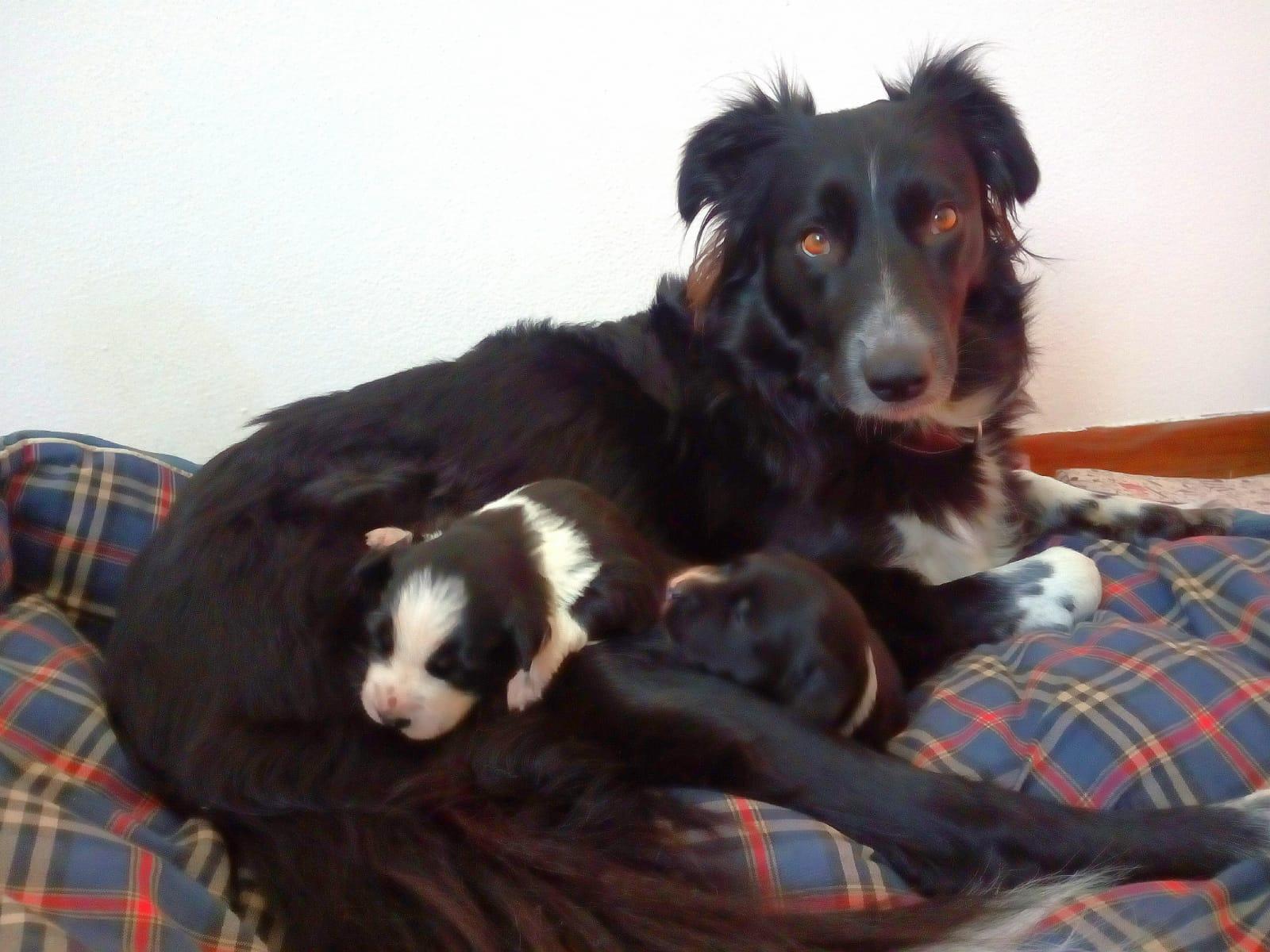 Penny e cuccioli