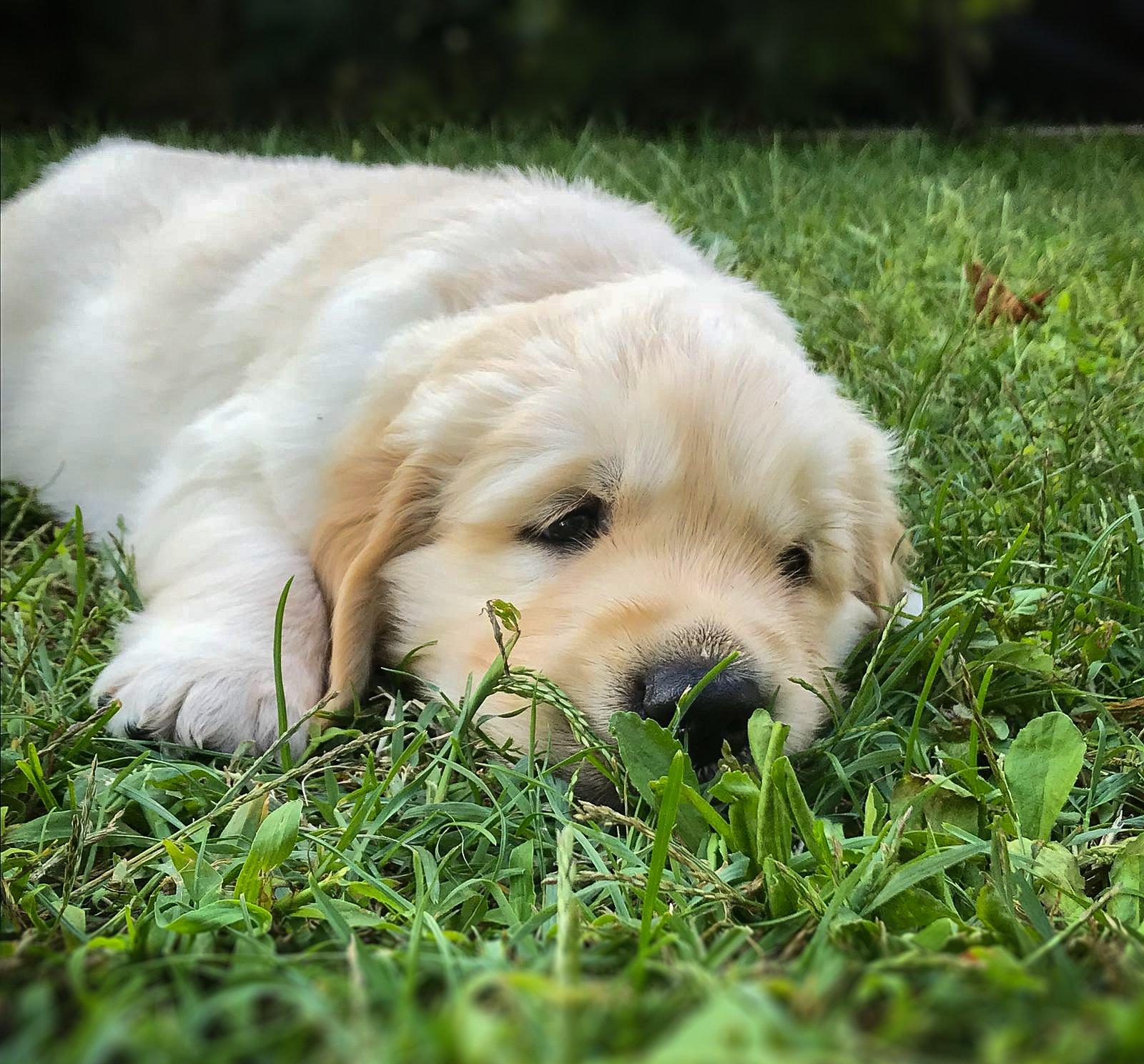 puppyF